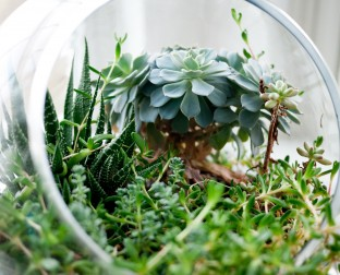 plant in glass bowl