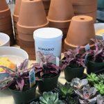 Classico Limewash + Terracotta Pots